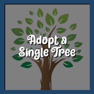 Adopt a Single Tree